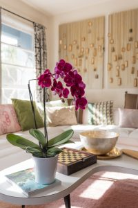 orchid in the living room